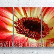 Модульна картина на полотні Червоно-жовта квітка код КМ100180-097 фото