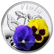 Анютины глазки - Серебряная монета в открытке-блистере фото