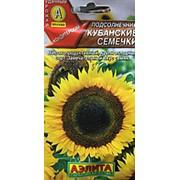 Подсолнечник Кубанские семечки, ц/п А фото