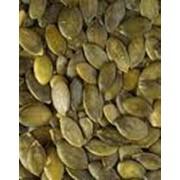 Ядро семечки тыквы фото
