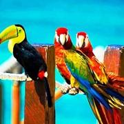 Ручные птенцы ара, жако, какаду, амазон,благородный попугай из питомников фото