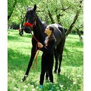 Конный спорт, обучение, Россия, Белоруссия, Украина фото
