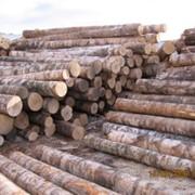 Сортиментная лесозаготовка береза, осины фото