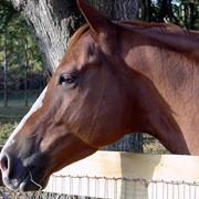 Консультации по уходу, содержанию лошадей, лечение лошадей фото