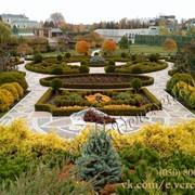 Ландшафтный дизайн Киев, благоустройство территории, озеленение участка фото
