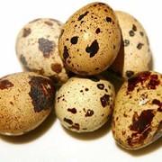 Яйцо перепелиное фото