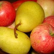 Яблоки, груши Польша фото