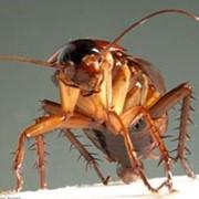 Борьба с тараканами, дезинсекция, дератизация