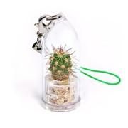 Хоуп Minicactus брелок с живым растением фото