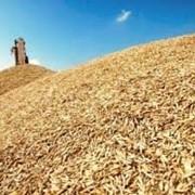 """Закуп продажа пшеницы ТОО """"Аль Грейн Трейдинг"""" фото"""