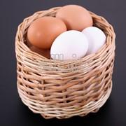 Яйцо инкубационное бройлера от Венгерского производителя. фото