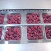 Ягоды замороженные МАЛИНА от производителя (1 класс) фото