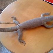 Чучло рептилий. фото