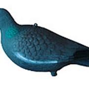 Чучело голубя (24 шт./уп.) фото