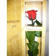 Розы долгосвежие фото