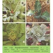 Почвенная подкормка капусты Aminocat 10 фото