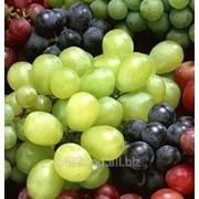 Виноград Киш Миш фото