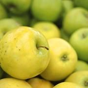 Разработки выращивания яблок фото