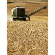 Обработка почвы, посев и уборка урожая фото
