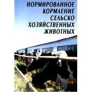 Кормление животных фото