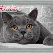 """Картина стразами """"Британский кот"""" АЖ-1463 фото"""
