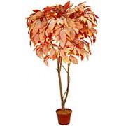 Искусственное дерево Кондуранго Давли (Код товара: 66785) фото