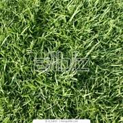 Устройство газона фото