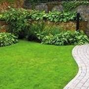 Биогумус органический 36 л удобрение для газона фото