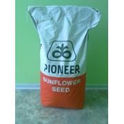Семена гибридов Pioneer в ассортименте фото