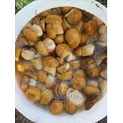 Грибы белые варено-соленые фото