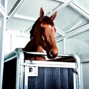 Лечебная кабинка для лошадей фото
