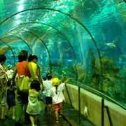Монтаж аквариумных витрин Киев, Киевская область, Украина фото