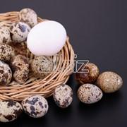 Яйца перепелиные в Одесской обл. фото