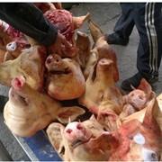Головы свиные 3 фото