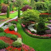 ландшафтный дизайн, озеленение  фото