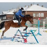 Гостиница Киев-S, Жашков, конно-спортивный клуб, ипподром, экскурсия фото