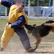 Охрана объектов с использованием караульных и патрульных собак фото
