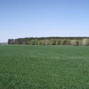 Участок земельный Макаровский р-н, с. Гавронщина, 28 га фото