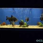 Консультация по запуску аквариума фото