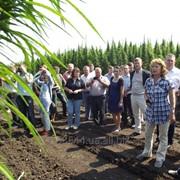 Научное сопровождение выращивания лубяных культур фото