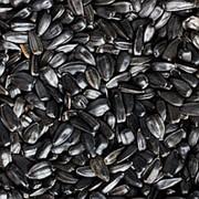 Семечки подсолнечника сырые мелкие, 500 гр фото