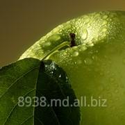 Яблоки натуральные на экспорт фото