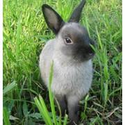 Лоскут кролика фото