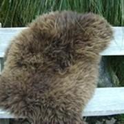 Шкура овечья фото