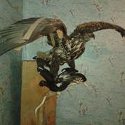 Чучело орел фото