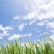 Бесплатный консалтинг по вопросам, касающимся экологии фото