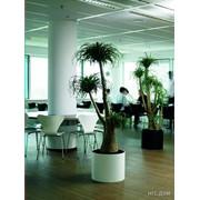 Лечение комнатных растений фото