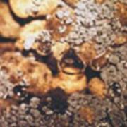 Системы биологической очистки. фото