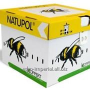 Улья шмелей для Биозащиты Natupol N фото