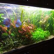 Консультации и рекомендации по выбору оборудования и декора для аквариума фото